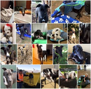 May 2016 Adopted dogs
